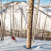 Jim Ryan skis amongst the wildfire burned trees in the Teton backcountry.