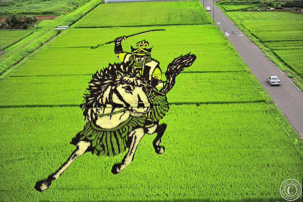 Rice field Art or Tambo Art.<br /> In northern Japan the small village of Inakadate plants five different varieties of rice all different colours to produce.   &quot;Rice field art&quot;<br /> <br />  This is an annual event and attracts many thousands of tourists. Every year in autumn they have a different subject matter to be viewed. <br /> <br />  The design is done by an artist and then in a computer the design is calculated and adjusted to what it would look like when it is viewed from the town hall watch tower. Then the design is marked out in the rice fields.<br /> <br />  On the planting day people from all over Japan, some exchange students from many countries and the local people spend about 2 hours planting the rice.
