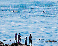 Tourists watch as a pod of Killer Whales approaches at Lime Kiln State Park, San Juan Island, Washington, USA.