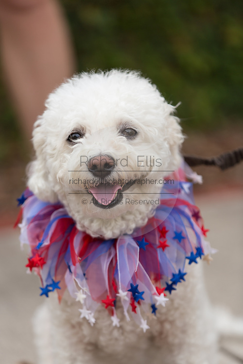 A dog dressed in patriotic colors during the annual I'On Community Independence Day Parade on July 4, 2012 in Mt Pleasant, South Carolina.