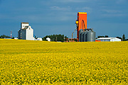 Canola and grain elevators