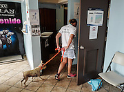 Scrappy,  just rescued from Guayanes Beach, Puerto Rico, is lead into the exam room at the Mi Mascota veterinary Clinic of Dr. Feliciano.