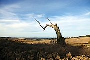 remains of a dead tree in landscape
