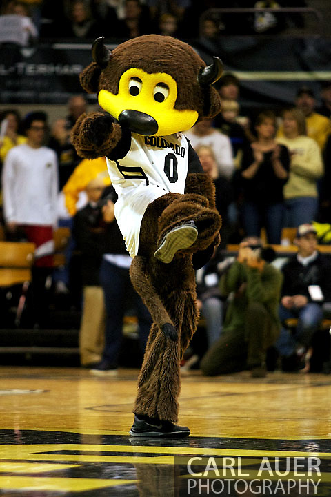 January 12th, 2013: Chips is all revved up for action as the teams are introduced before the start of the NCAA basketball game between the UCLA Bruins and the University of Colorado Buffaloes at the Coors Events Center in Boulder CO