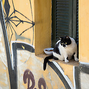 Cat in a window in the Plaka neighborhood of Athens, Greece