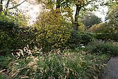 Autumn Garden 1019