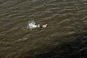 Nederland, nijmegen, 17-7-2018Mensen trekken massaal naar de oevers van de waal en de nieuwe spiegelwaal in het rivierpark aan de overkant van Nijmegen . Het nieuwe recreatiegebied is een aanwinst voor de stad en omgeving. Op de foto de kant van de soiegelwaalr. Door de langdurige droogte en hoge temperaturen is de waterstand laag . Foto: Flip Franssen