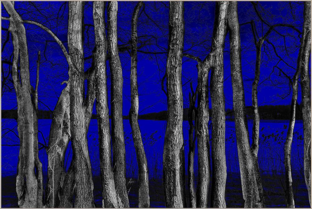 &quot;TREES / VANSJ&Oslash;&quot;<br /> Format: 105x70cm<br /> Print: Aluminium<br /> Limited edition: 10