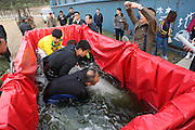 YANTAI, CHINA - OCTOBER 30: (CHINA OUT) <br /> <br /> Ocean Aquarium Of Penglai Introduces 10 Russian White Whales<br /> <br /> Ten Russian white whale calfs get transferred to Ocean Aquarium of Penglai on October 30, 2014 in Yantai, Shandong province of China. Ocean Aquarium Of Penglai introduced 10 white whales calfs from Russia, which contains 3 male and 7 female. <br /> ©Exclusivepix