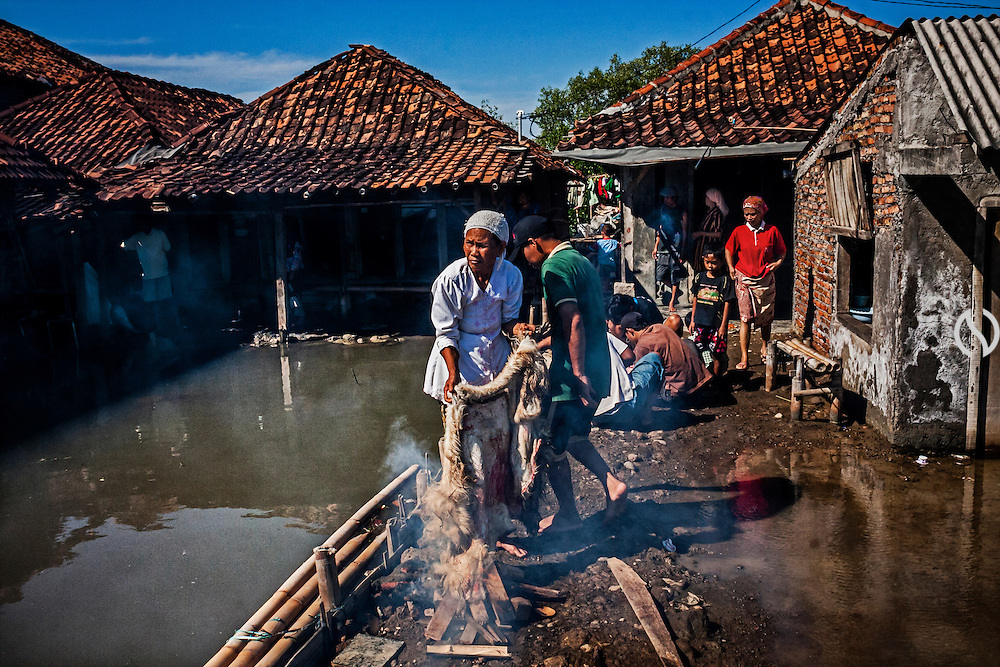 Elderly Indonesian muslim woman burns goat skin to remove the hair as they celebrate Eid Al-Adha while frequently flood hitting the land of Bedono village.