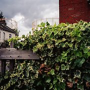 Victorian Gasometers tower over the ivy covered garden fences in suburban Wood Green. North London 2003. United Kingdom