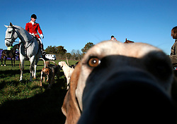 UK ENGLAND SURREY TILFORD 13NOV04 - Huntsman and Whip Ian Shakespeare, sitting on horseback is surrounded by hounds as he prepare for a foxhunt near the village of Tilford in southern Surrey. Foxhunting in rural Surrey with the Surrey Hunters Union, founded in 1798. <br /> <br /> 