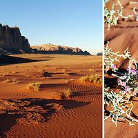 Wadi Rum, Jordan. Copyright 2014 Terence Carter / Grantourismo. All Rights Reserved.