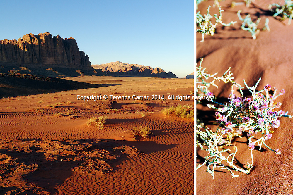 Wadi Rum, Jordan. Copyright 2014 Terence Carter / Grantourismo. All Rights Reserved.