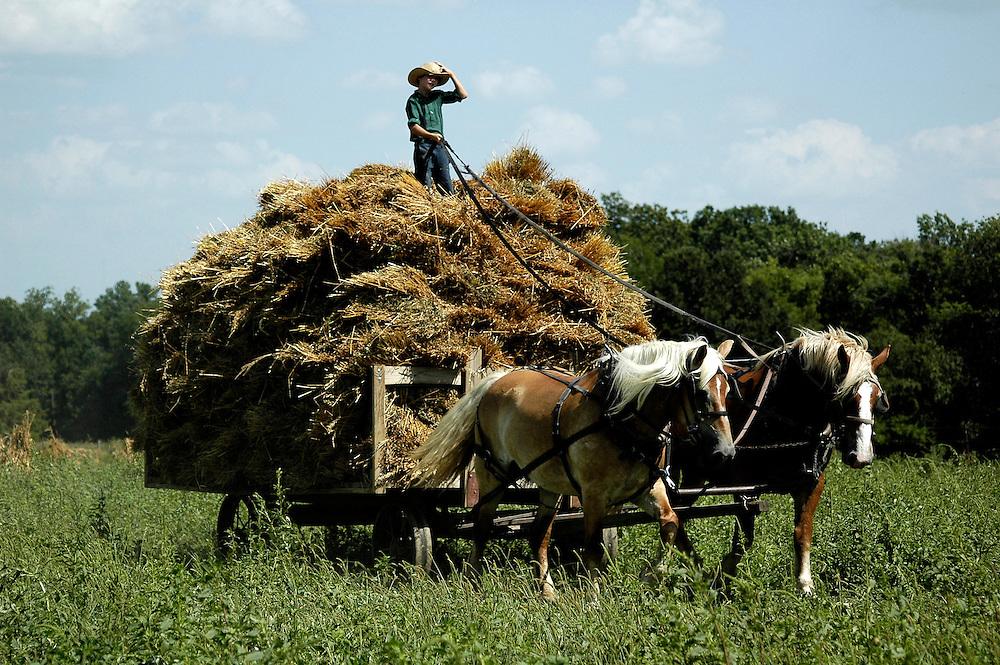 R&eacute;colte de l'avoine &agrave; la ferme des Miller.<br /> <br /> Miller's farm, oat's harvest and threshing.