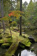 A moss covered bridge to an island in a pond and a colourful acer tree in the Saiho-ji Garden (Temple of Moss) Kyoto, Japan