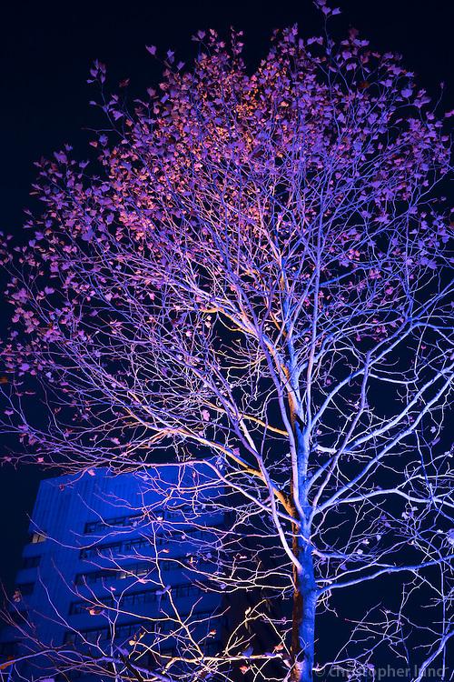 Kari Kola's Magical Garden in Eindhoven, part of the Glow Light Festival.