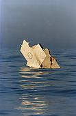 The Crash of TWA Flight 800