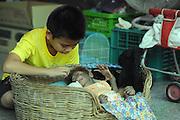 BANGKOK, March 15, 2016 <br /> A boy watches a sleeping baby orangutan at a zoo in suburban Bangkok, Thailand, March 15, 2016. <br /> ©Exclusivepix Media