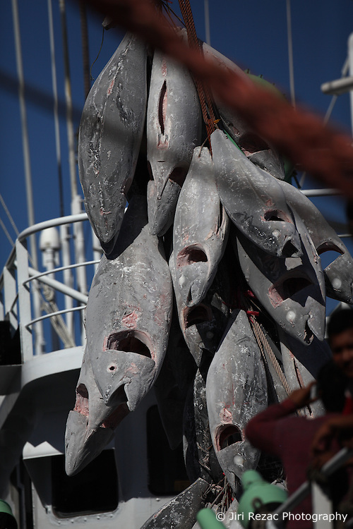 INDIAN OCEAN 26APR13 - Detail view of tuna transhipment on the high seas in the Indian Ocean from the Taiwanese longliner Yi Long No 202 to the Tuna Queen, a reefer vessel  registered in Panama.<br /> <br /> <br /> <br /> The Greenpeace ship Esperanza is on patrol in the Indian Ocean documenting fishing activities.<br /> <br /> <br /> <br /> jre/Photo by Jiri Rezac / Greenpeace