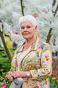 Dame Judi Dench launches a re-elming initiative on the Hillier Nurseries stand - Press preview day at The RHS Chelsea Flower Show.