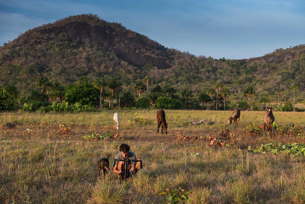 Saddle Mountain Ranch<br /> Savanna <br /> Rurununi<br /> GUYANA<br /> South America,<br /> cattle<br /> Zach Montes