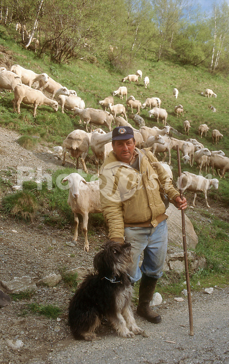 Shepherd with sheep dog and herd of sheep near Ardales; Andalucia,