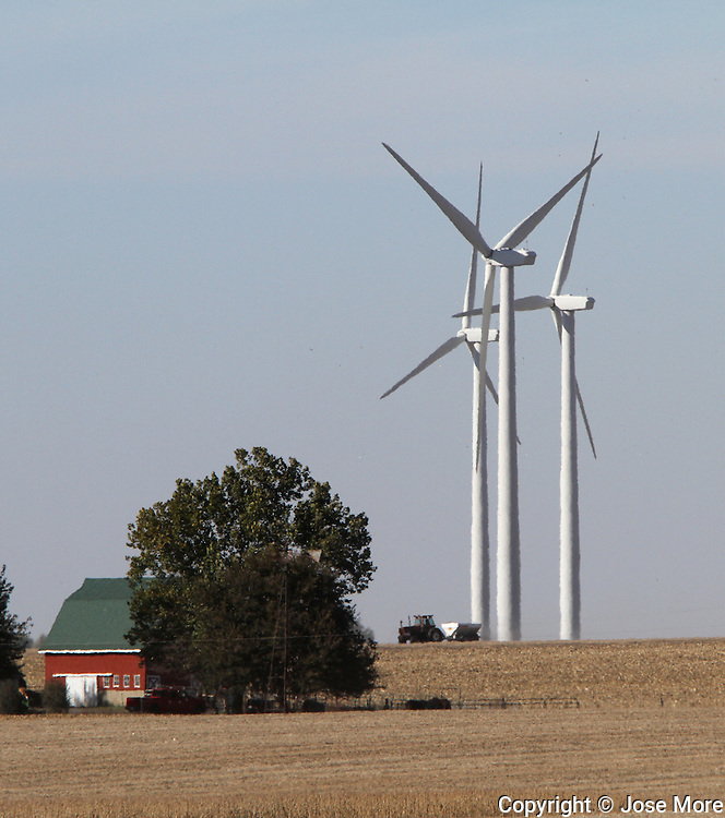 A farmer harvest soy beans among<br />