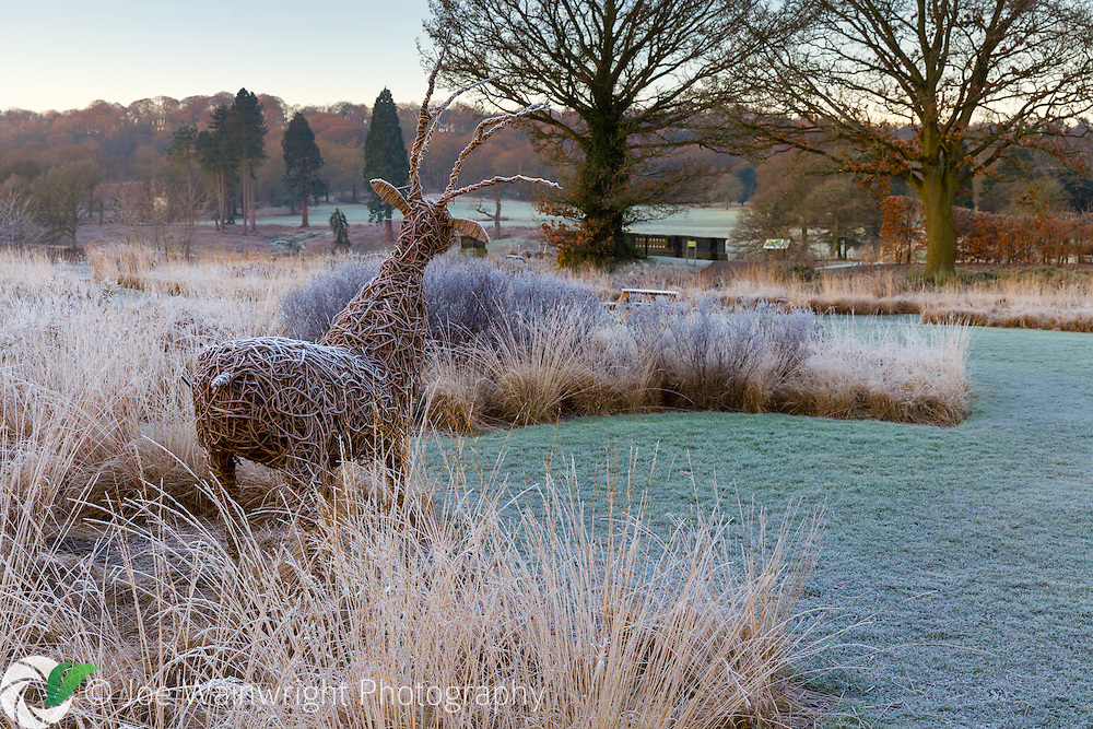 A frosty January dawn breaks over the Rivers of Grass section of Trentham Gardens, Staffordshire - designed by Piet Oudolf