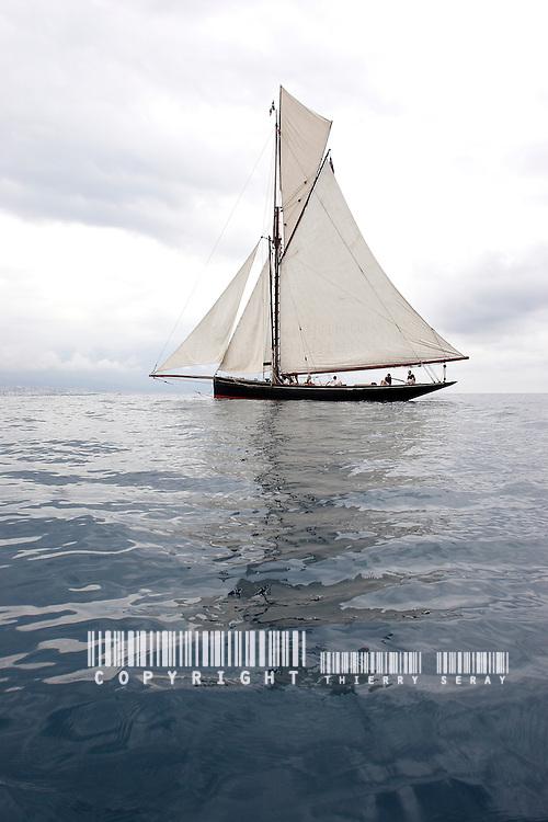 Marigold. 1892.Voiles d'Antibes 2007.