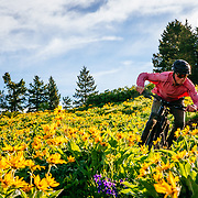 Malachi Artise riding in the arrowleaf balsamroot in the Tetons.