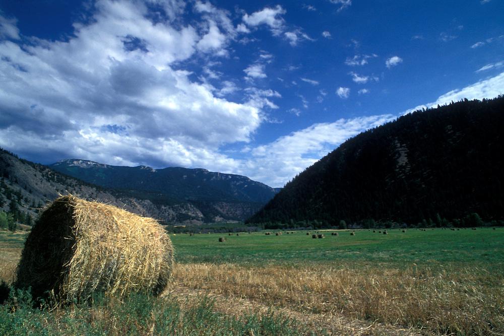 Canada, British Columbia, Pavilion, Hay bales line farmer's field along Highway 99