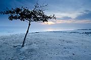 Tree and sand prints in the beach at dawn. Pacheca Island, Las Perlas Archipelago, Panama, Central America.