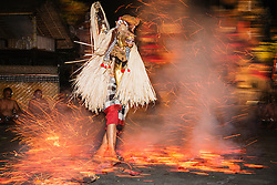 A Balinese male dancer riding his imaginary horse runs barefooted through fire and hot embers during a traditional Balinese Fire dance, Bali,Indonesia