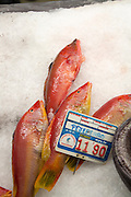 Lachnolaimus maximus barbed hogfish on sale  fishmongers at Playa Blanca, Lanzarote, Canary Islands, Spain