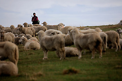 ROMANIA ZARNESTI 29OCT12 - A shepherd tends to his flock of sheep near the town of Zarnesti in the southern Carpathian mountains, Romania.....jre/Photo by Jiri Rezac..© Jiri Rezac 2012