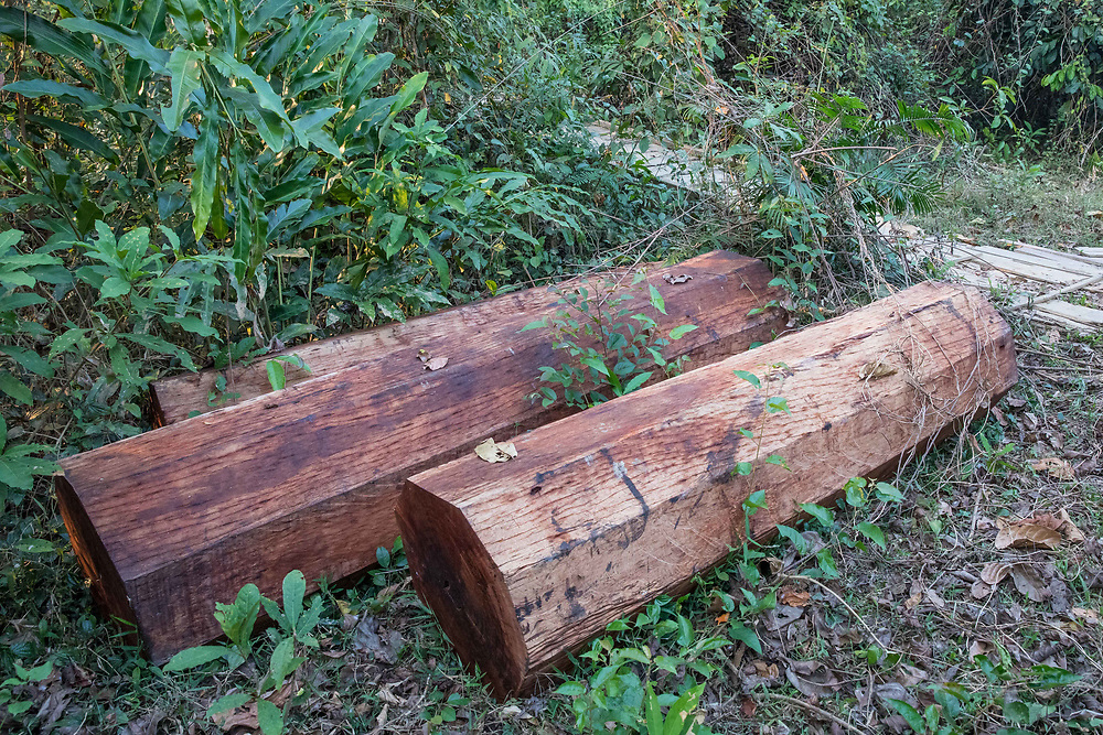 Illegal logs confiscated and awaiting sale