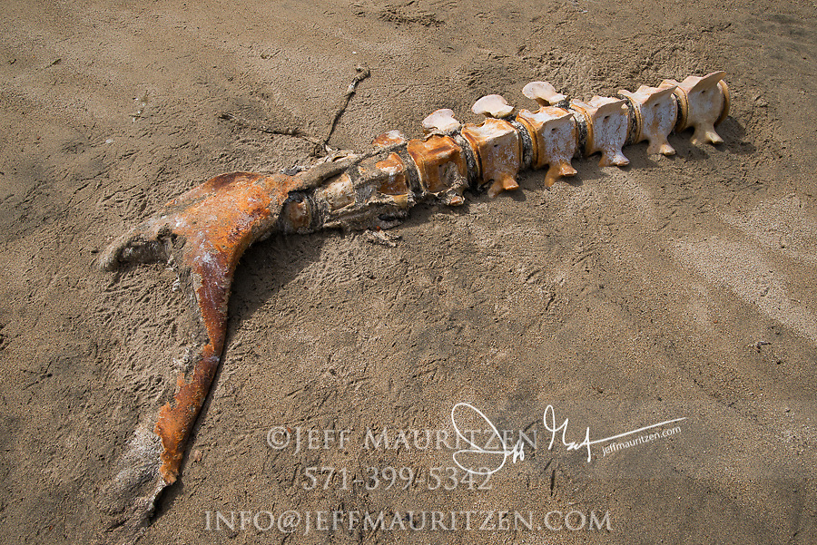 The skeletal remains of beached whale bones in Laguna San Rafael National Park, Chile.