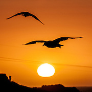 The birds made for an easy sunset shot in Crescent City, California.