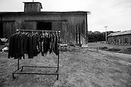 """A collection of leather riding jackets and vests were among countless collections of like-items for sale during the annual """"50 Mile Yardsale"""", Saturday, July 30, 2016 along Route 90 in the Cayuga Lake region of the Finger Lakes, New York."""