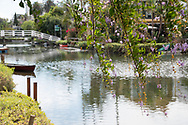Venice landscape photo print of the Venice Canals and purple flowers on tree branches hanging over the water. California wall art for your home. Los Angeles, Westside, Southern California landscape photography. Matted print, limited edition. Fine art photography print.