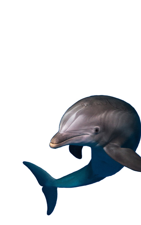 Dolphins at The National Aquarium   September 2, 2015