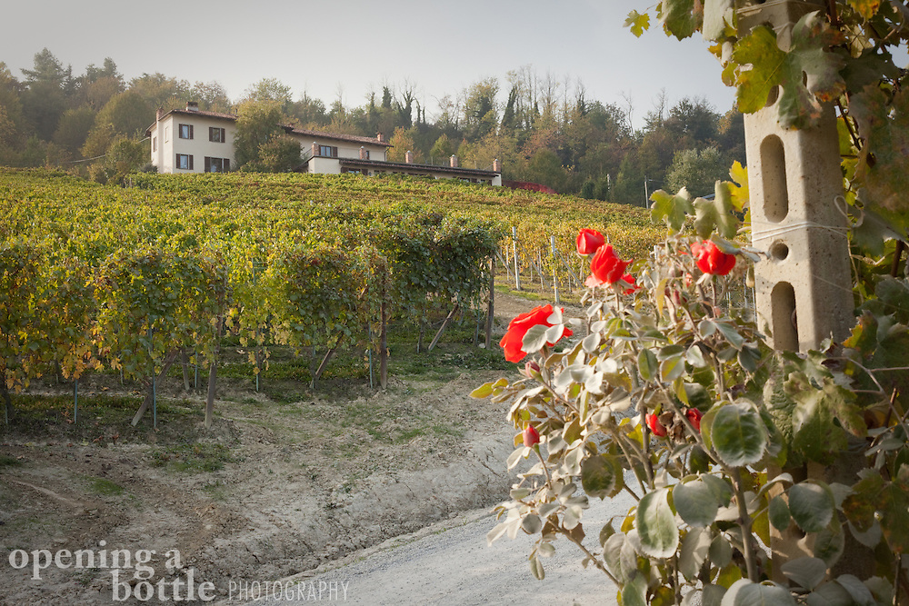A bed and breakfast sits atop a vineyard covered hill with a rose in the foreground in the Italian wine country of Barolo, near La Morra (Piedmont), Italy.