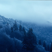 Foggy morning in monochrome
