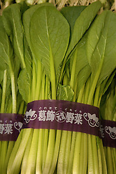Asia, Japan, Tokyo, bok choy on display at Tsukiji Fish Market