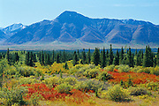 autumn in the boreal forest and St. Elias Mountains<br /> Kluane National Park<br /> Yukon<br /> Canada