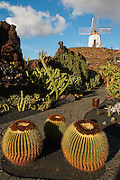 Espagne. Iles Canaries. Lanzarote. Guatiza. Le jardin de cactus de Cesar Manrique. // Spain. Canary islands. Lanzarote. Guatiza, the Cactus Garden created by César Manrique