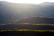 Vines, desert, mountain.