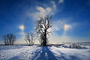 Sundogs and cottonwood tree (Populus deltoides), Grande Pointe, Manitoba, Canada