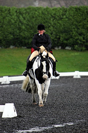 Affiliated dressage at Sheepgate Equestrian Centre..1-11-2009.Horse 284